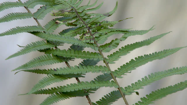 fern swaying in the wind in rural dumfries and galloway south west scotland - johnfscott stock videos & royalty-free footage