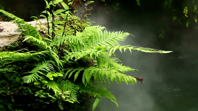 fern with fog - fern stock videos & royalty-free footage