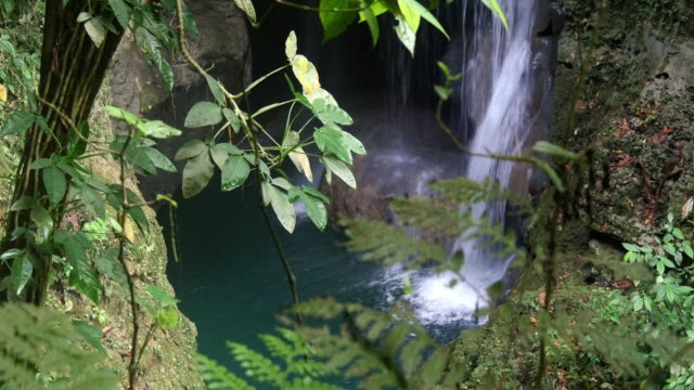 ferns and waterfall in the jungle - jamaica stock videos & royalty-free footage