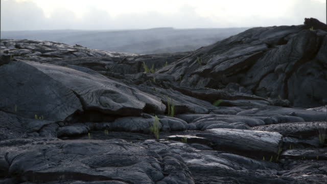Ferns begin to colonise lava field, Hawaii