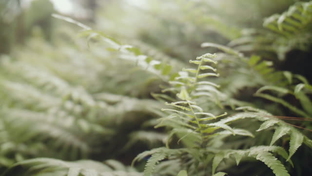 ferns in the forest - fern stock videos & royalty-free footage