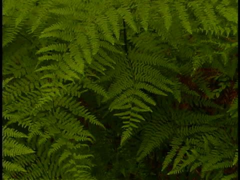 vidéos et rushes de ferns - sparklondon