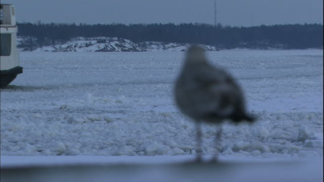a ferry on the icy baltic sea sails past seabirds at the port of helsinki. - baltic sea stock videos and b-roll footage