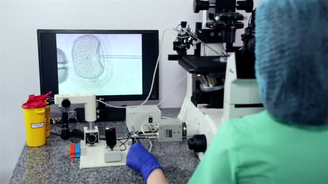 fertilization of the human egg. in vitro fertilisation. - microbiologia video stock e b–roll