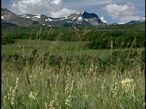 zo, ws, fescue prairie with mountains in distance, alberta, canada - alm stock-videos und b-roll-filmmaterial
