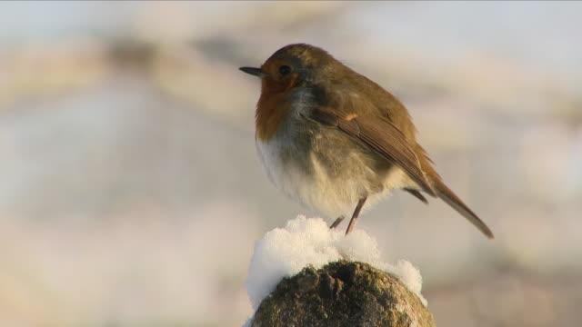 stockvideo's en b-roll-footage met festive robin in winter - sneeuwvlok