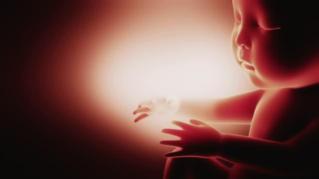 胎児アニメーション抽象 - 人間の子宮点の映像素材/bロール