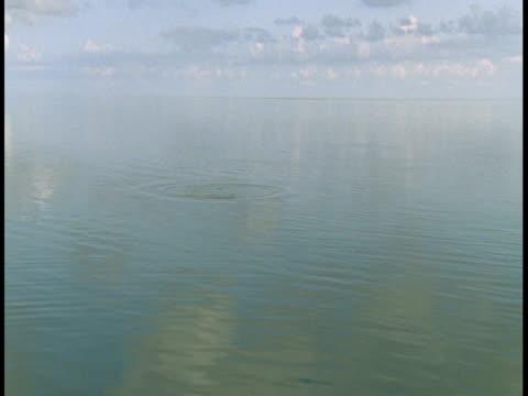 vídeos y material grabado en eventos de stock de a few atlantic tarpon surface in calm waters that reflect fluffy clouds. - salir del agua