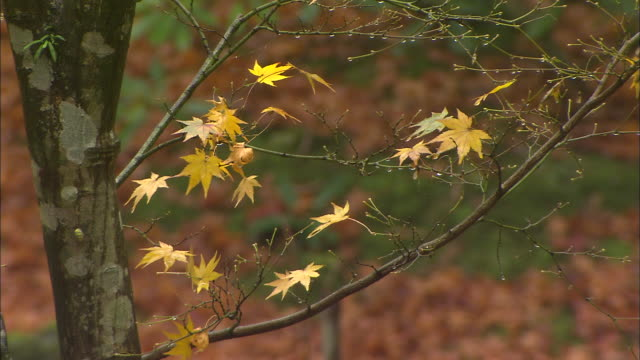 A few autumn leaves cling to narrow branches.
