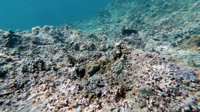 few corals left on underwater bleached coral reef - reef stock videos & royalty-free footage