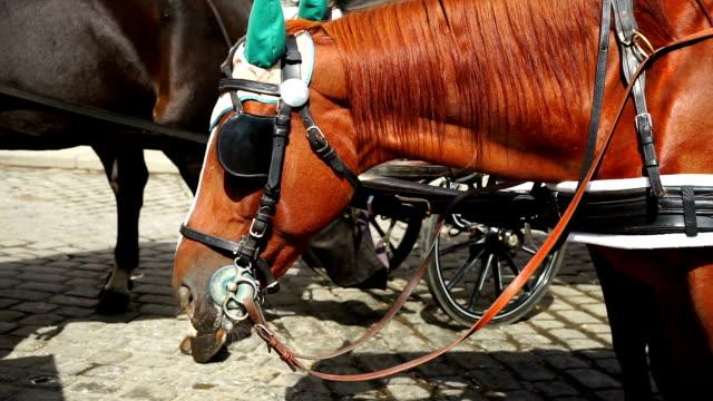 fiaker-pferd - pferdeantrieb stock-videos und b-roll-filmmaterial