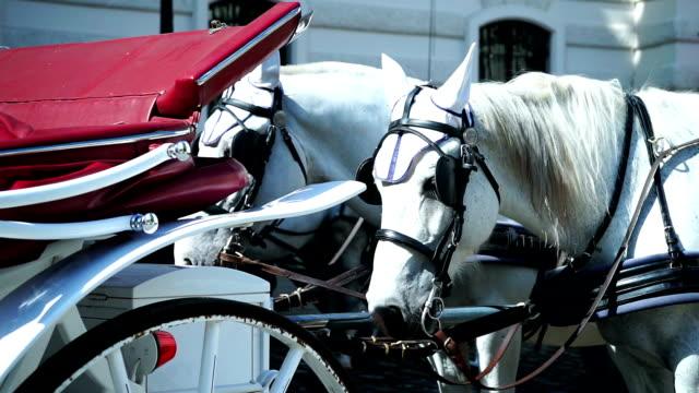 Fiaker horse