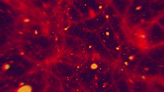 fibers under the microscope - profase video stock e b–roll