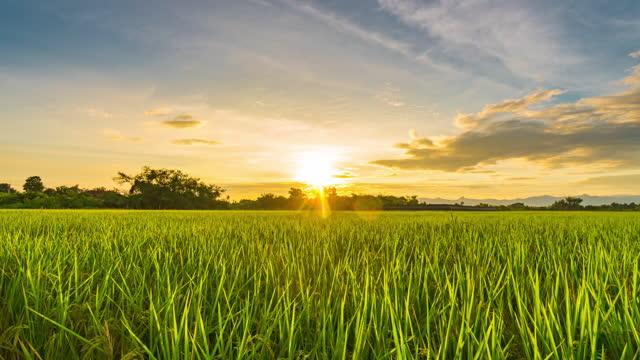 vídeos y material grabado en eventos de stock de agricultura de campo y campo de arroz puesta de sol 4k lapso de tiempo. - crepúsculo