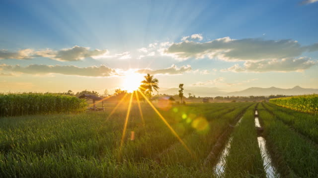field and sunset in thailand country.