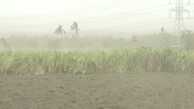field covered in ash and dust blows through air in strong wind after taal volcano erupts in philippines - dust stock videos & royalty-free footage
