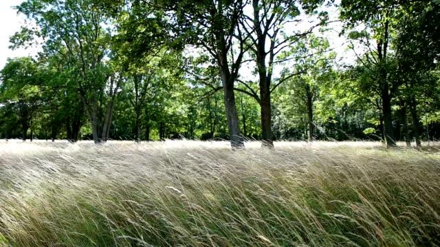 field crop field swaying though wind - prosperity stock videos & royalty-free footage