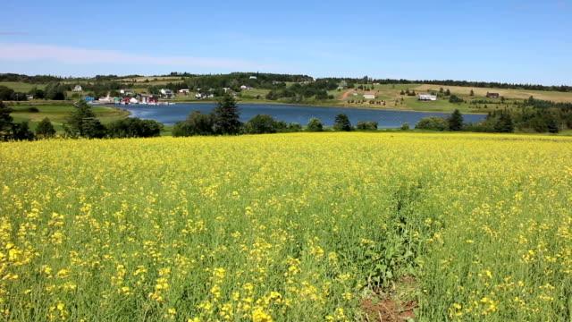 Field Full of Yellow Flowers