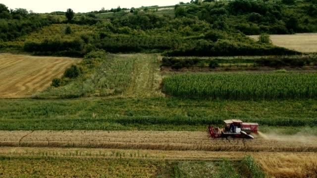 フィールドハーベスタは一日の終わりに働く - トラクター点の映像素材/bロール