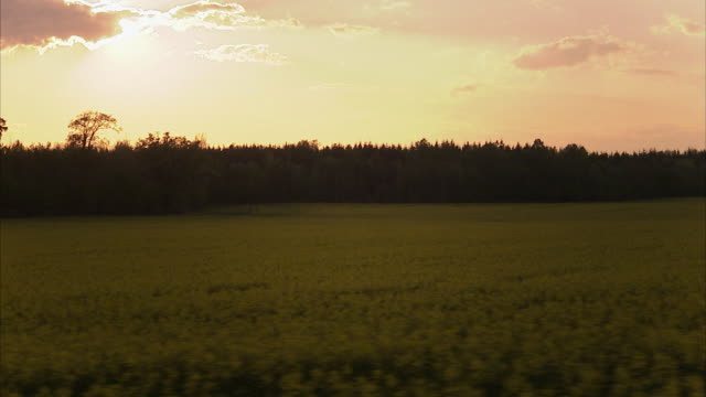 vidéos et rushes de a field in the dusk sweden. - crucifers