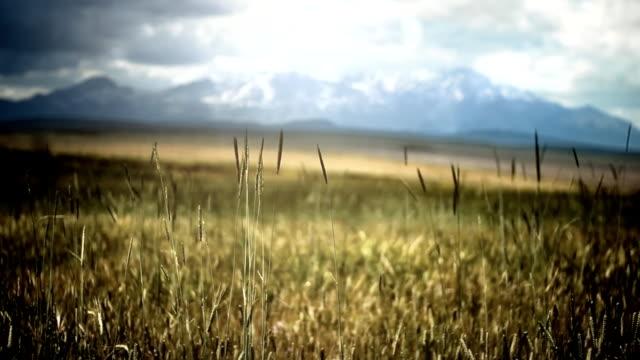 campo verde con vento - vignettatura video stock e b–roll