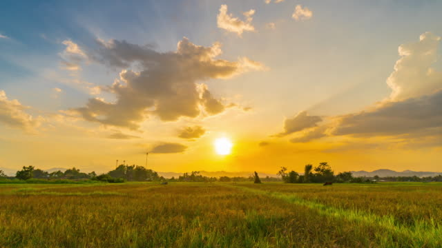 field meadow and clouds moving sunset 4k time lapse. - national grassland stock videos & royalty-free footage