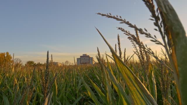 vídeos de stock, filmes e b-roll de campo de milho, com recorte armazém à distância - milho