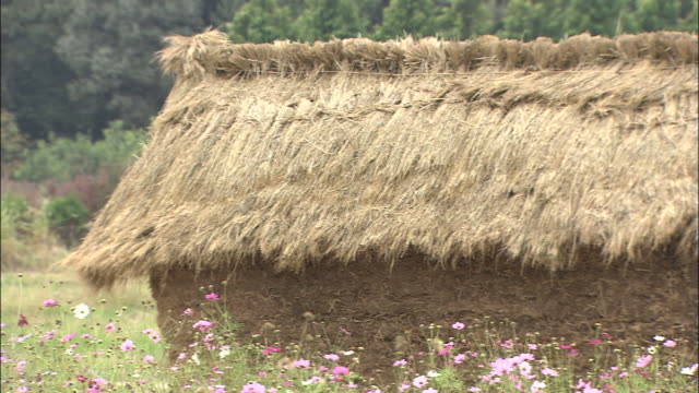 a field of cosmos flowers surrounds a haystack. - saitama city stock videos & royalty-free footage