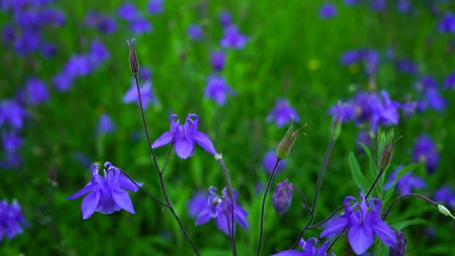 Field of flowers in springtime