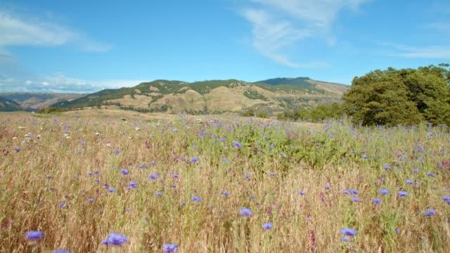 field of flowers rowena crest columbia river gorge wildflower meadow - 草地点の映像素材/bロール