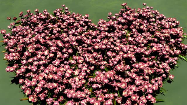 vídeos de stock, filmes e b-roll de campo de flores  - símbolo conceitual
