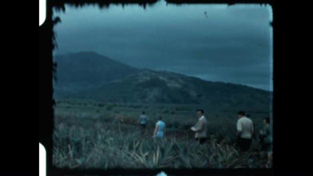 field of pineapple from the early 1960's. - プランテーション点の映像素材/bロール