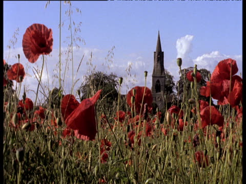 field of red poppies swaying in summer breeze, church tower under bright blue sky in distance - armistice stock videos & royalty-free footage