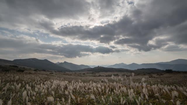 vídeos de stock, filmes e b-roll de field of reeds in yeongchuk mountain - ponto de referência natural