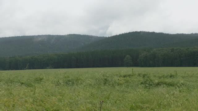 vídeos de stock, filmes e b-roll de campo de centeio em um fundo de montanhas - overcast