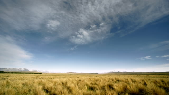 T/L, WS, Field of tussock grass, South Island, New Zealand