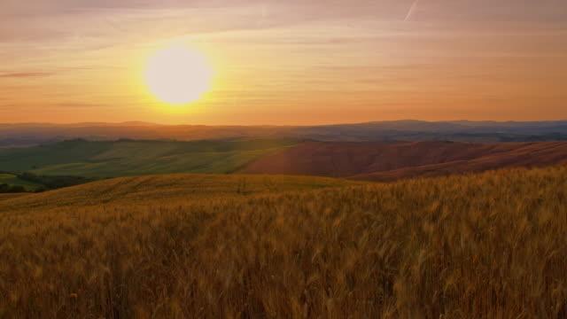 vídeos de stock, filmes e b-roll de ds campo de trigo no pôr do sol no vento - colina