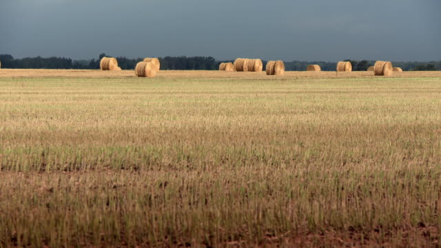 a field of wheat with some haystacks on it - manitoba stock videos & royalty-free footage