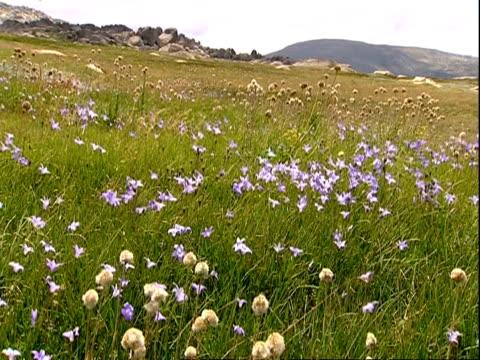 wa field of wildflowers blowing in breeze - wildflower stock videos & royalty-free footage