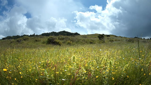 field of wildflowers, oregon - wiese stock-videos und b-roll-filmmaterial