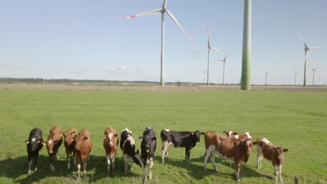 field of wind turbines - schleswig holstein stock videos & royalty-free footage