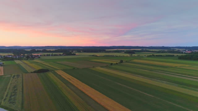 vídeos y material grabado en eventos de stock de vista aérea de campo de jóvenes plantas de maíz - multicóptero