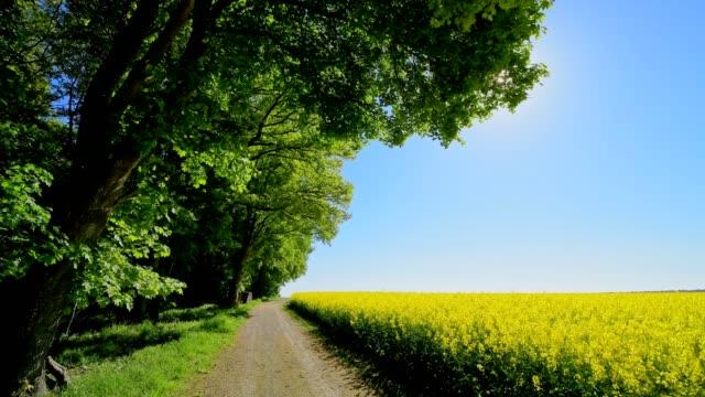 vidéos et rushes de field path with maple tree forest and rape field - aménagement de l'espace