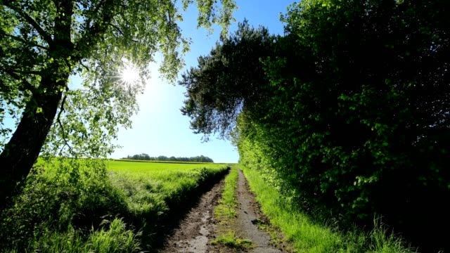 field road road with sun in spring, baden-württemberg, germany - baden württemberg stock videos & royalty-free footage