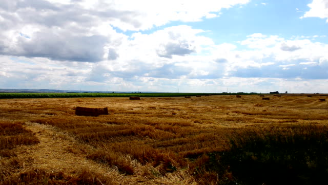 Field Stubble Landscape with Straw Bales in Summer