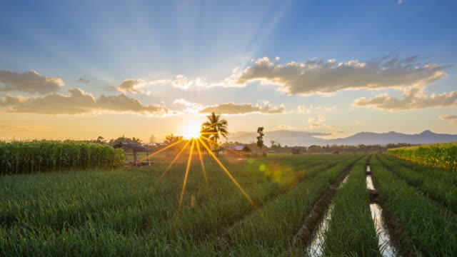 Field Sunrise in Morning at Thailand : 4K Time lapse.