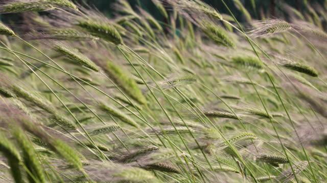 field under the sun - cibo biologico video stock e b–roll