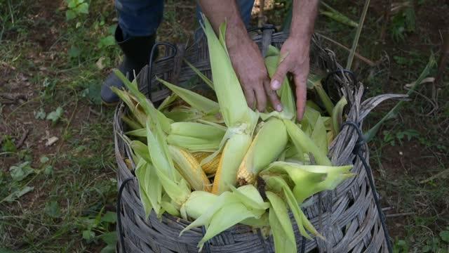 field vegetables / city - cornfield - enchendo stock videos & royalty-free footage
