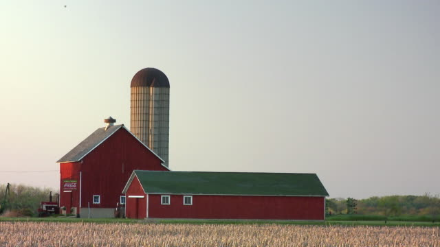 WS Field with barn and silo in background / Newark, Illinois, USA