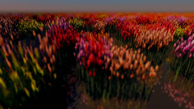 field with flowers - 3d animation stock videos & royalty-free footage